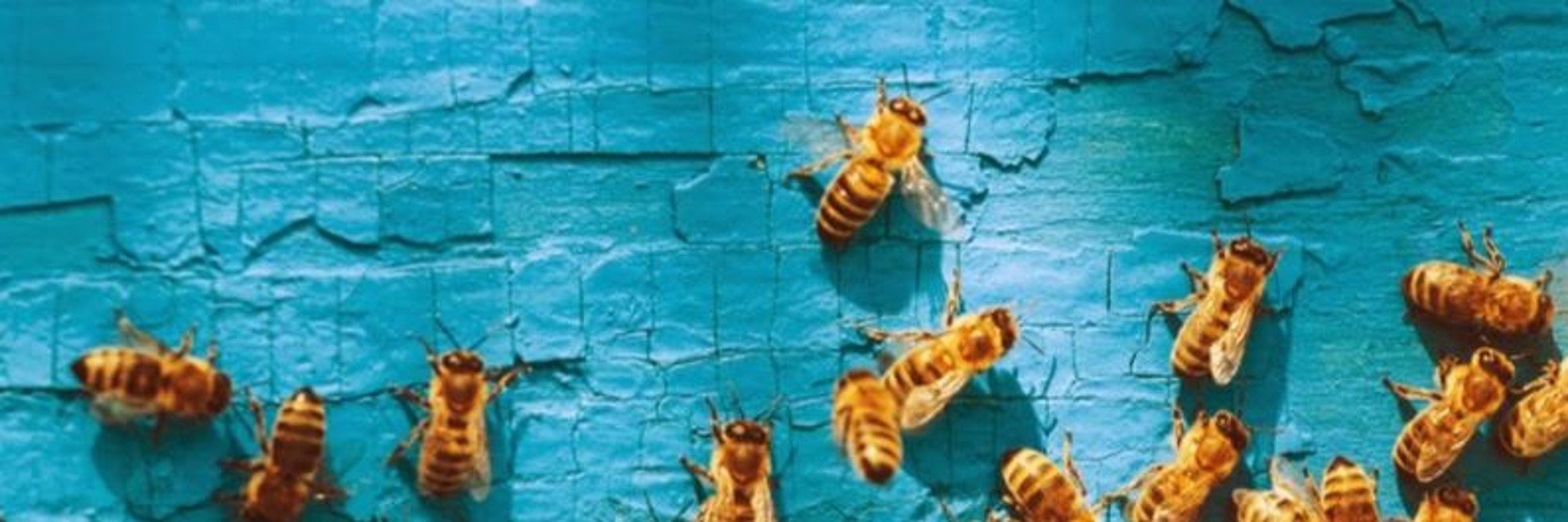 Bees on blue-1