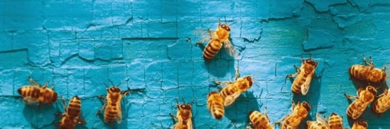 Bienen auf Blau