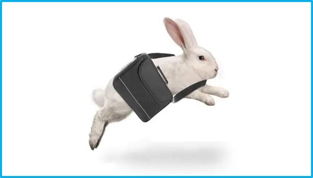 Job-Hopping Rabbit